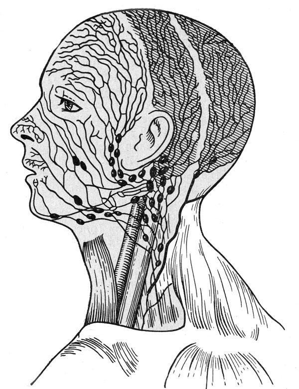лимфатических узлов лица и