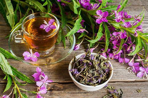 Иван-чай в традиционной медицине