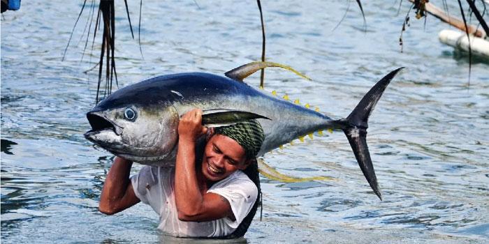 Ловля тунца в Испании: особенности и польза