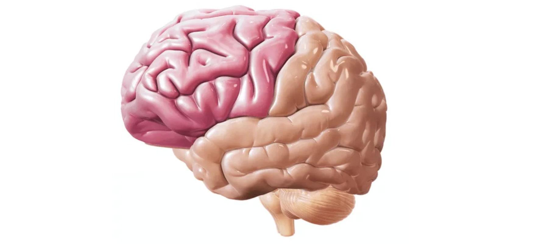 Симптомы опухоли лобной доли головного мозга